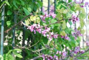 Spring was well underway at Castelnaudary