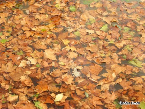 Leaves beneath the waters of the Canal du Midi.