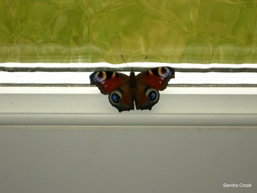 The caterpillar does all the work, but the butterfly gets all the publicity.  George Carlin