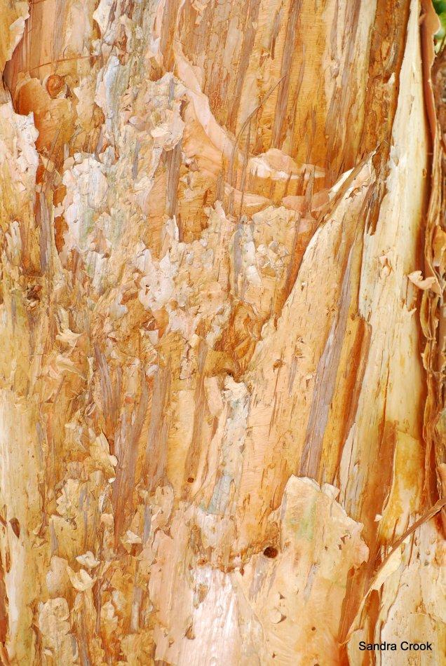 Exposed tree trunk