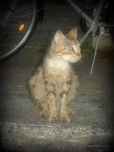 Stray cat at Buzet, France