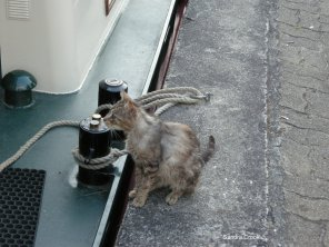 Stray cat trying to come on board.