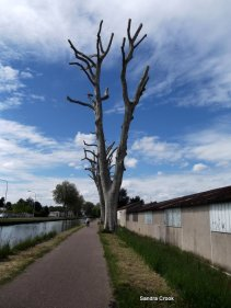 The once splendid plane trees leading downstream from Paray.
