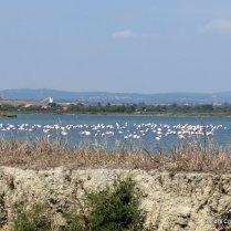 Flamingos on the salt lakes