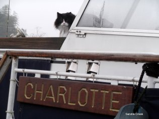 my neighbour's cat on my other neighbour's boat