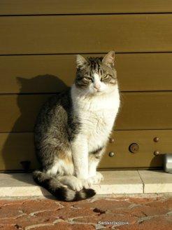 spanishcat1