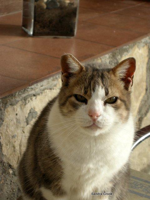 spanishcat2
